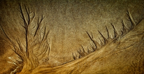 Petrified Forest, Stradbroke Island, Australia